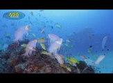 Les meilleures captures vidéo sous l'océan