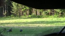 Turkeys Suck: Sarah's First Gobbler Hunt