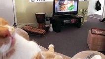La padrona è rimasta sconvolta quando ha visto cosa stava facendo il suo gatto!