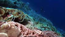 National Geographic Animales Salvajes Tiburón Eden [Nat Geo Wild Documental] - 2016