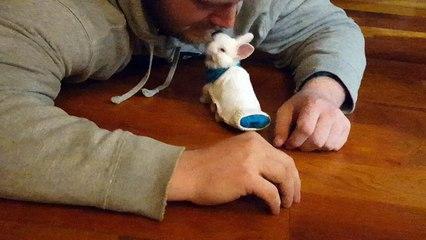 Ce bébé lapin paralysé réussi à bouger grâce à un mini-skateboard