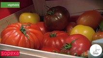 Prince de Bretagne : «En tomate, nous présentons sur Berlin la nouveauté 2016:  «ma corbeille de tomate» à destination du consommateur»