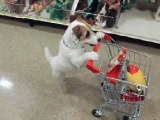 Funny Gifs and Memes Compilation Hilarious pics