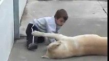 Gli animali hanno molto piu sentimento di noi.. guardate e imparate il vero amore
