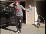 Wonderful Cat dance - Must watch