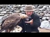 Eagle attacks wolf. hunting - YouTube