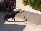 Il se fait encorner les testicules par un taureau