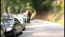 Wild Elephant Tramples Tourist Cars on Southwest China Highway