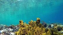 Snorkeling in Sithonia Halkidiki Greece 2015, GoPro