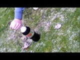backwards and slowmotion mentos and coca cola cool explosion chalenge