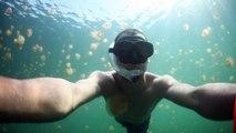 Plongée dans un lac plein de méduses? JELLYFISH LAKE / Malk à Palau