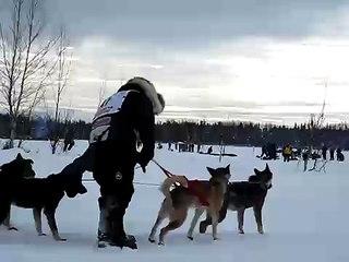 Lance Mackey's Dog gets tangled #2 - Iditarod