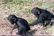 Monos graciosos Videos Chistosos Funny monckeys Funny videos