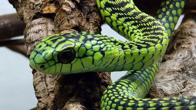 5 Deadliest Snakes in the World! 5 Weird Animal facts - Ep. 15  AnimalBytesTV