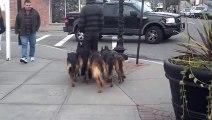 Il se fait suivre par 5 chiens mais ce n'est pas ce que vous croyez !