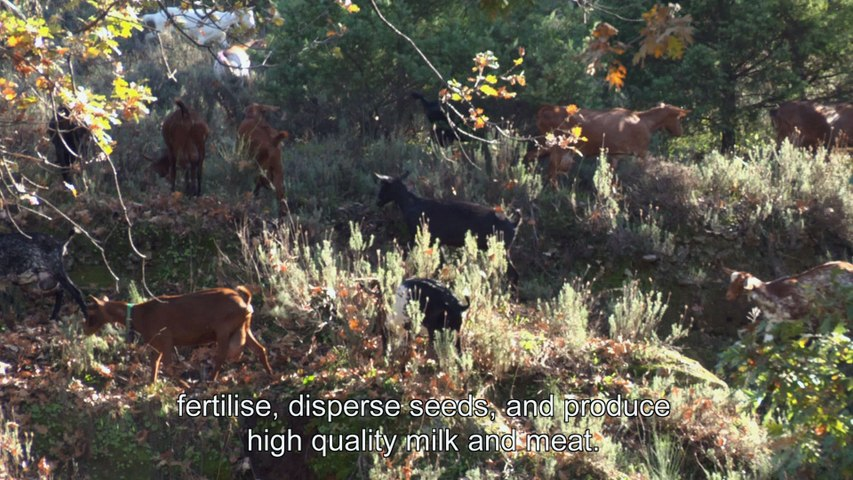 Farming Nature: Spain - Sierra de Gredos, land of oaks and goats