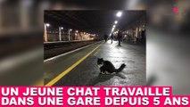 Un jeune chat travaille dans une gare depuis 5 ans ! Découvrez son quotidien dans la minute chat #146