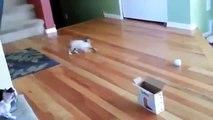 Cat Jump Fails Top 10 -  Funny Cats & Cute Kittens