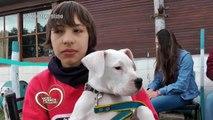 Amores Perros y Otros Amores - exposición del Dogo Argentino octubre 2015