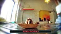 LES MEILLEURES VIDÉOS VIDEOSP!ON33 intéressant✔blagues✔effrayant✔spectaculaire✔fun - 2016