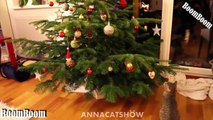 Funny Videos - We Wish You A Merry Christmas - Funny Cats and Dogs Videos Merry Christmas