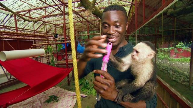 Monkeys bursting bubbles - Natures Miracle Orphans: Series 2 Episode 3 - BBC One