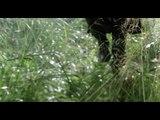 Mon combat (Tir Nam Beo)  - La légende du Roi Arthur