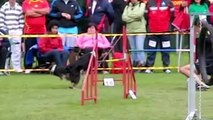 Dog Agility Competition - Sport, Speed and Beauty