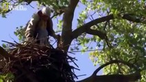American Bald Eagle Hunting Attack [Nature Wildlife Documentary]