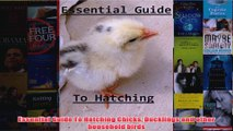 Download PDF  Essential Guide To Hatching Chicks Ducklings and other household birds FULL FREE
