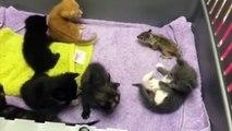 Elle dépose un bébé écureuil parmi des chatons, voyez ce qui se produit quand la maman revient!