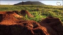 Karıncaların sıradışı doğal afet yöntemleri