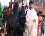 Horses- Tent Pegging - Neza Bazi,Lahore Punjab Pakistan Part 1