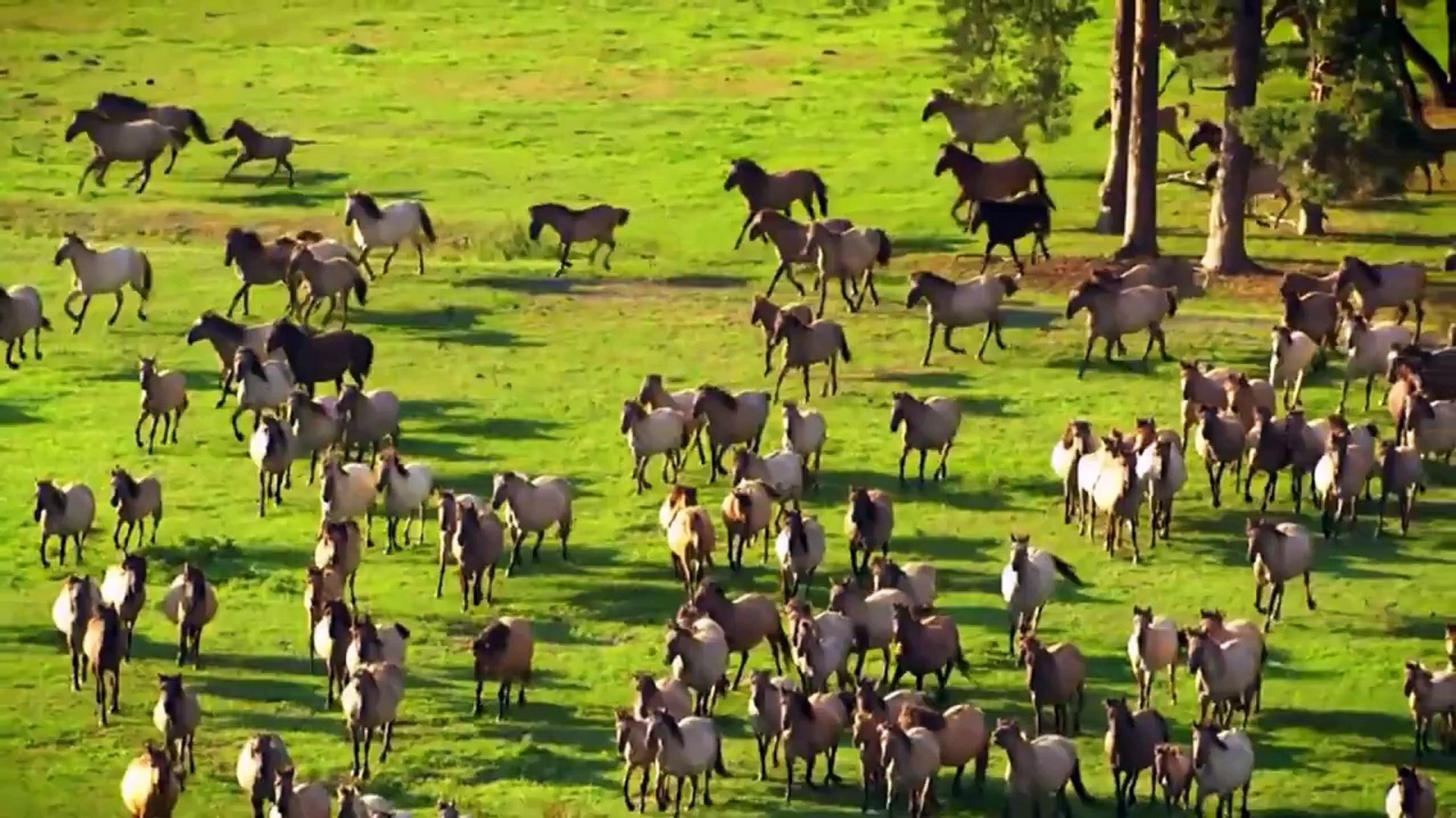 Wild Horses Where Horses Live The Amazing Horses Videos With Beautiful Music Must Watch Video Dailymotion