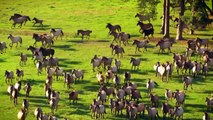 Wild Horses ! Where horses live ! The amazing horses videos with beautiful music.!Must Watch