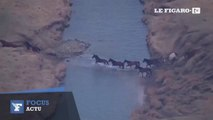 Des chevaux sauvages échappent à un feu de prairie