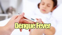 Dengue Fever Symptoms, Causes, and Treatments    Cure Fever Tips