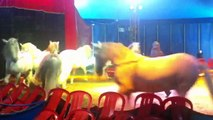 Andalusian horses - amazing circus show