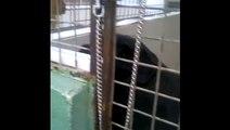 BBC1_ Spotlight 4Mar16 - 2 dogs on death row in Devon