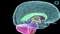 Pre-Meditated Violence Discovered In Hypothalamus