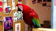 Kids Dancing Party - Dancing dog - Dancing Bird - Dancing Gorilla - YouTube