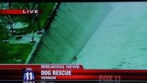 Des pompiers américains à la rescousse d'un chien en situation de détresse