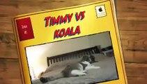 Timmy the scottish fold cat vs koala WILD AND MAD [funny cats]