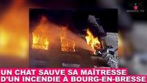 Un chat sauve sa maîtresse d'un incendie à Bourg-en-Bresse ! L'histoire dans la minute chat #153