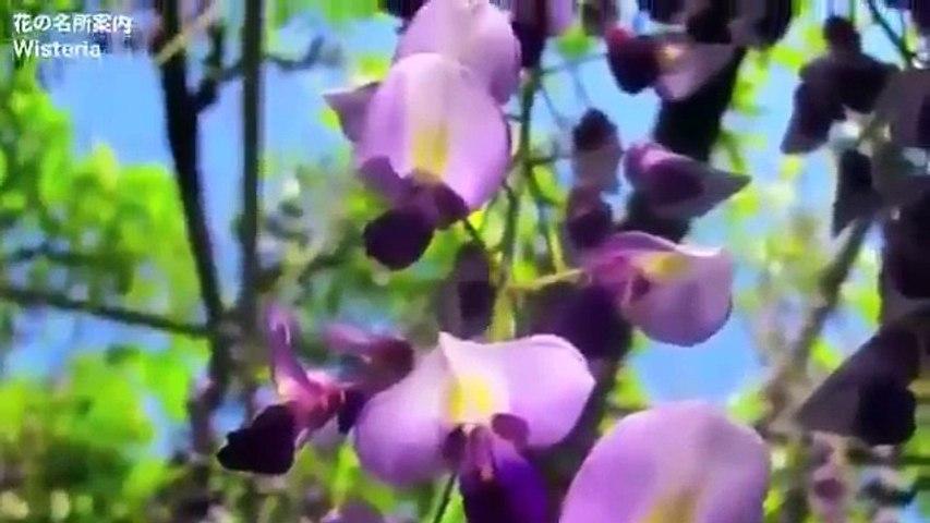 [ Du học Nhật Bản] Vườn hoa