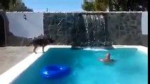 Un chien sauve son maitre qui fait semblant de se noyer