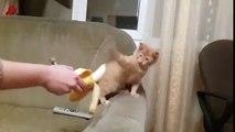 Vicces videók/Funny videos-Cats Don't Like Bananas LOL