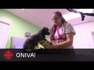 ONdécouvre - Tania Konkin, toilettage de chiens