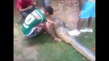 pitbull yiyen anakonda Anaconda killed a pitbull