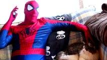 Spiderman vs Catwoman vs Batman in Real Life! Catwoman Kidnaps Batman - Fun Superhero Movi